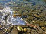 A cutthroat discovers freedom on an Idaho Creek