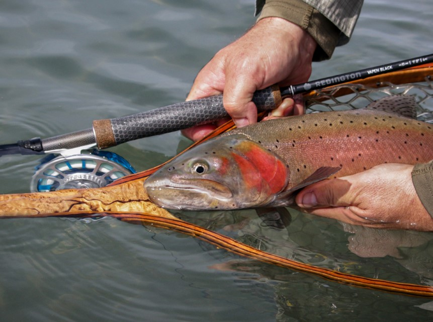 A Lahontan Cutthroat Trout in a Custom Sierra Net by Greg Madrigal